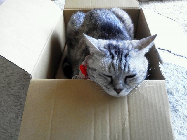 箱入りタバサ2