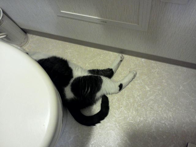 トイレでひんやり