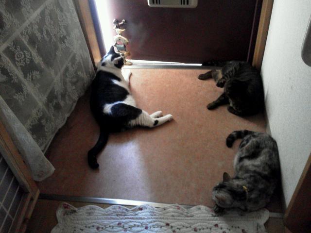 玄関で伸びる猫たち