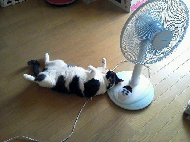 扇風機はマクラなの1