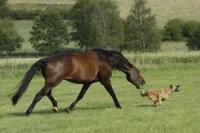 horse_04.jpg