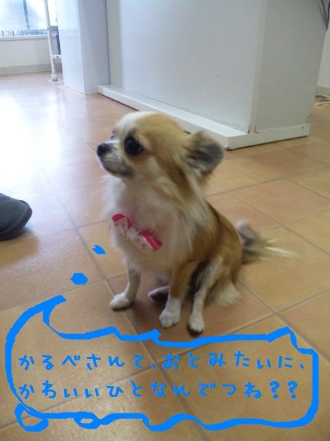 DVC00404_20120215110627.jpg