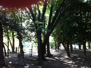 Park 072011 5