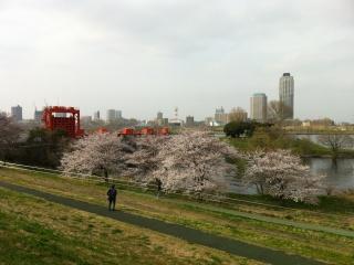 itabashisakura.jpg