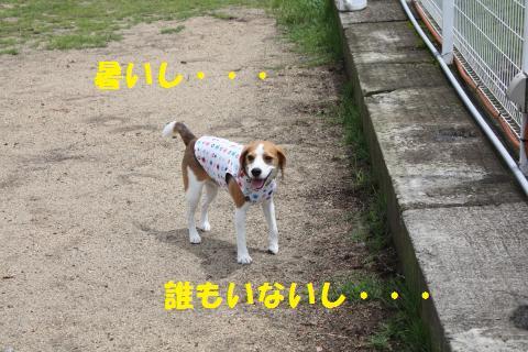 IMG_4432_convert_20110831114403.jpg