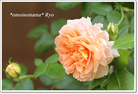 IMG_0458_20110513220248.jpg