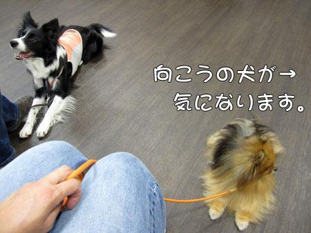 20110620_2.jpg