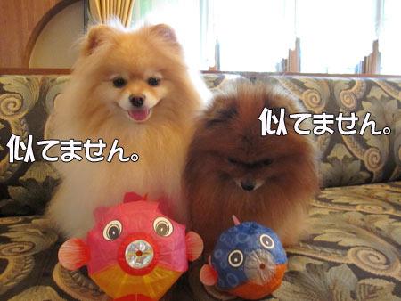 20110715_14.jpg
