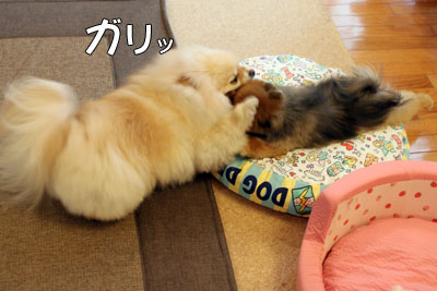 20110811_4.jpg