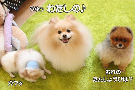 20111130_12.jpg