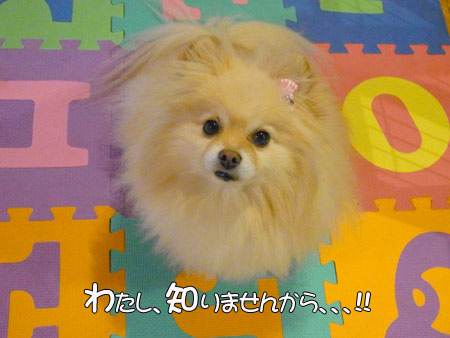 20120124_23.jpg