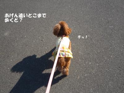 IMG_5343D