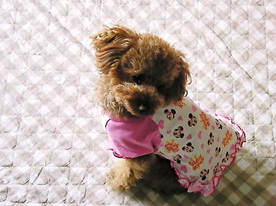 2010_0402_085746-SANY0002.jpg