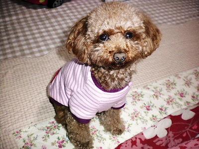 2010_0408_200839-SANY0328.jpg