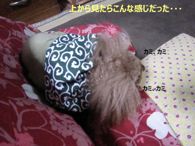 IMG_6789D
