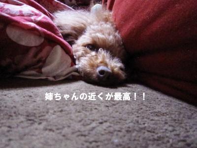IMG_7013D