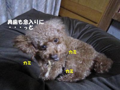 hamigaki5.jpeg