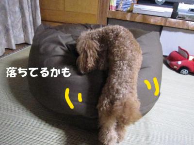 hamigaki7.jpeg