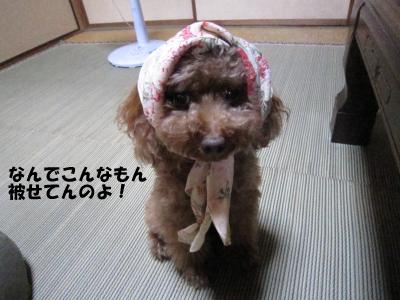 nashi2.jpeg
