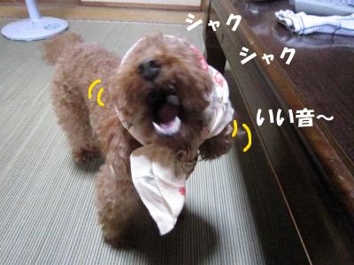 nashi5.jpeg