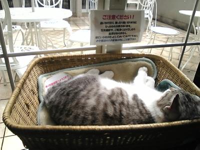 木の花美術館の看板猫ダヤン
