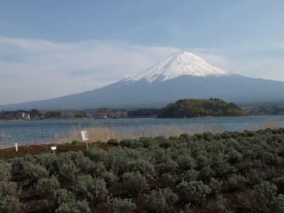 富士山(河口湖畔の大石公園より)
