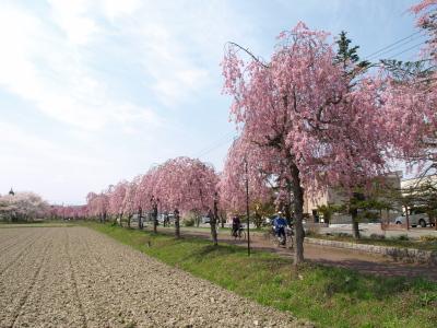 日中線記念自転車歩行者道しだれ桜並木道_2010/05/02