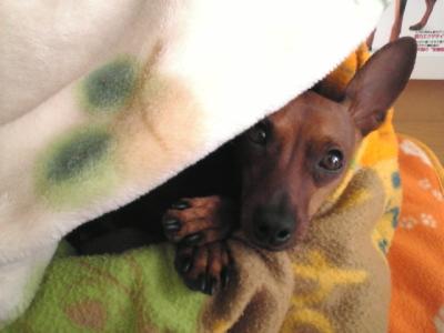 毛布とアクア