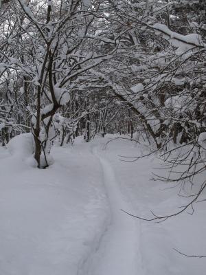 天神浜の林道_2011/01/22