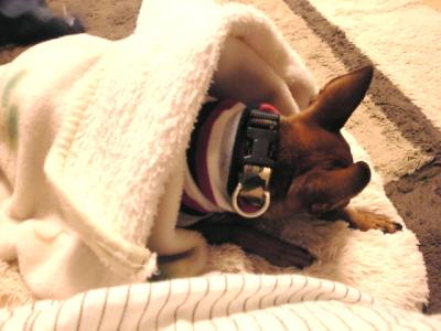 余震への緊張疲れで眠るアクア