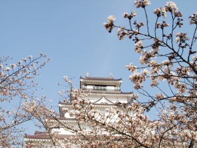桜と鶴ヶ城天守閣