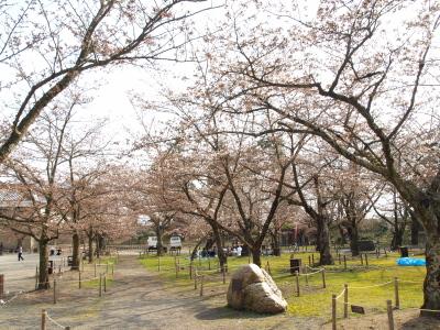 桜@鶴ヶ城公園