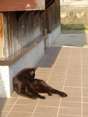 黒猫@まちの駅 飯盛山