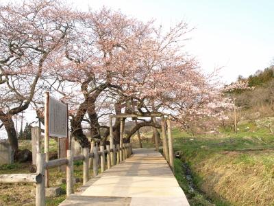 石部桜_2011/04/21夕方