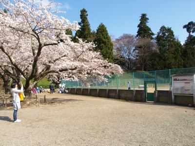 鶴ヶ城公園の桜(2011/04/25)