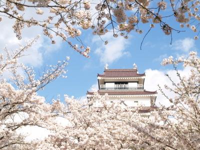 鶴ヶ城天守閣と桜(2011/04/25)