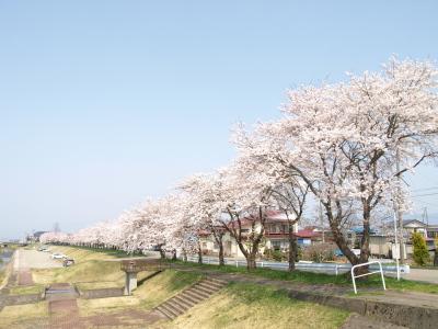 宮川の千本桜_2011/04/27