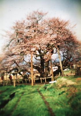 石部桜_2010/04/24