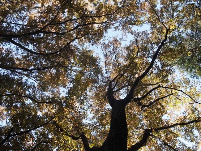 小平中央公園1_R