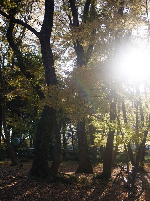 小平中央公園9_R