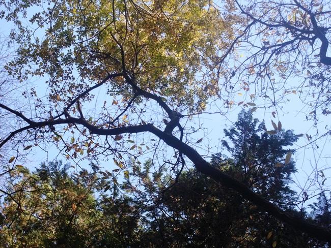 小平中央公園11_R