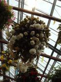 見上げる位置の花