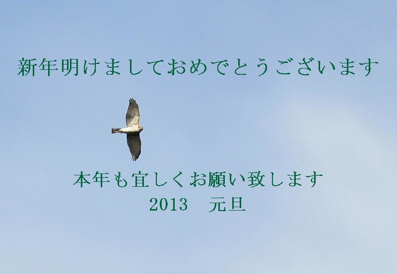5Y7C9798-sasiba2013.jpg