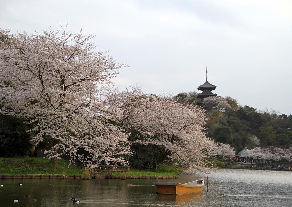 IMG_0554-sakura.jpg