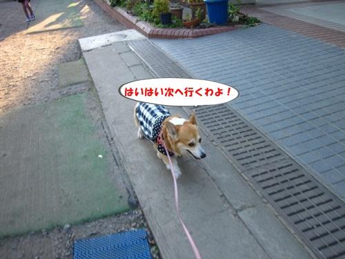 IMG_3843_201312071143448cc.jpg