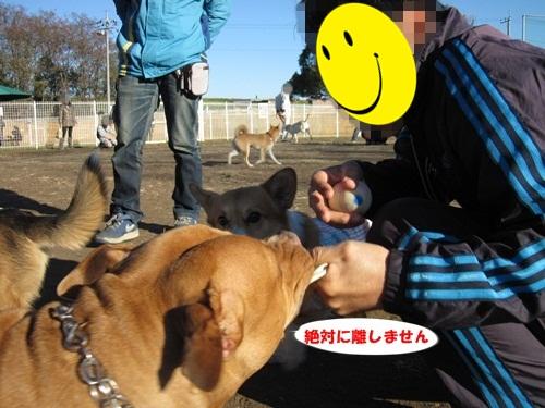 IMG_4035_201312202123366fb.jpg