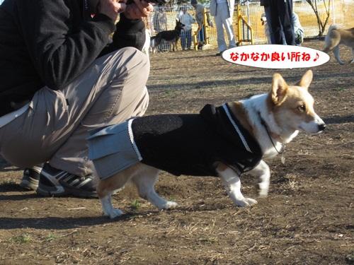 IMG_4044_20131220212231f4c.jpg