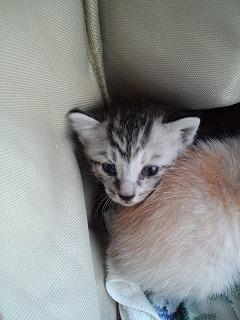 保護猫2010 サバ