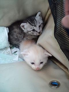 保護猫2010