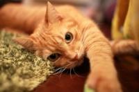 cat_45789_2_convert_20141112154510.jpg